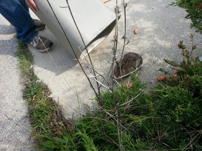 release-the-rabbit