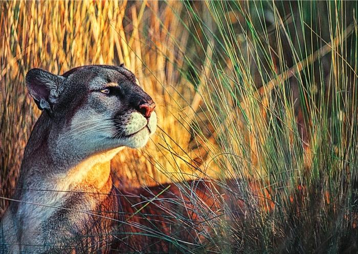 Wildlife_Master_white